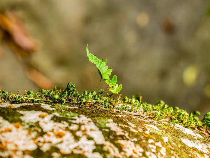 Small plant growing on colourful rock Selective Focus Green Color Growth Leaf Plant Part Plant Close-up Day Nature No People Outdoors Beginnings Beauty In Nature Focus On Foreground Sunlight Vulnerability  Tranquility Land Field Moss Small Plant Rock Stone