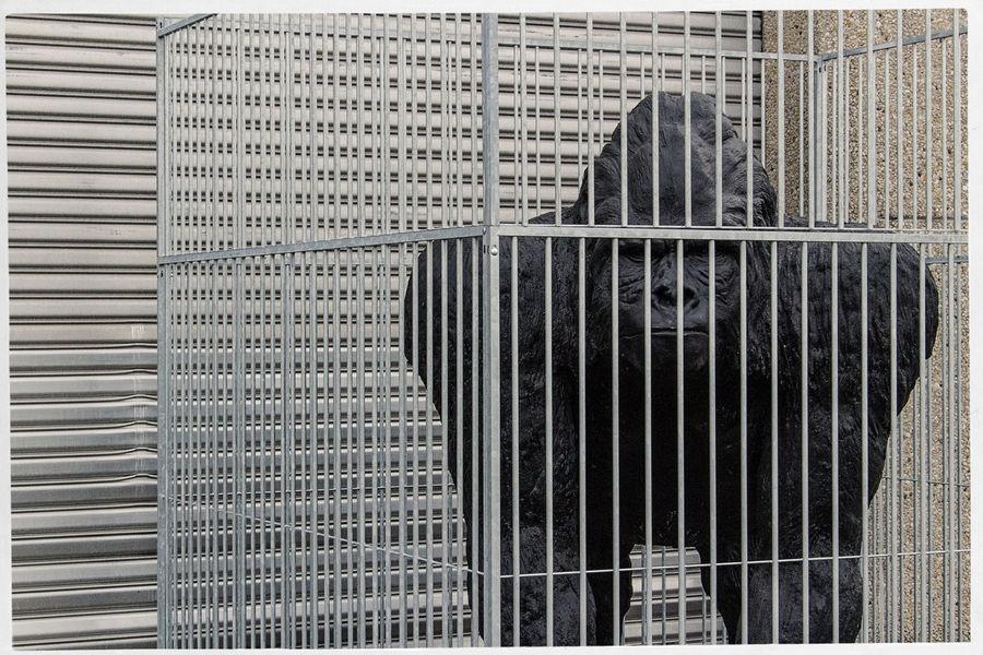 monkey business Abstract Backgrounds Design Full Frame Gorilla Metal Monkey Pattern Wall Window