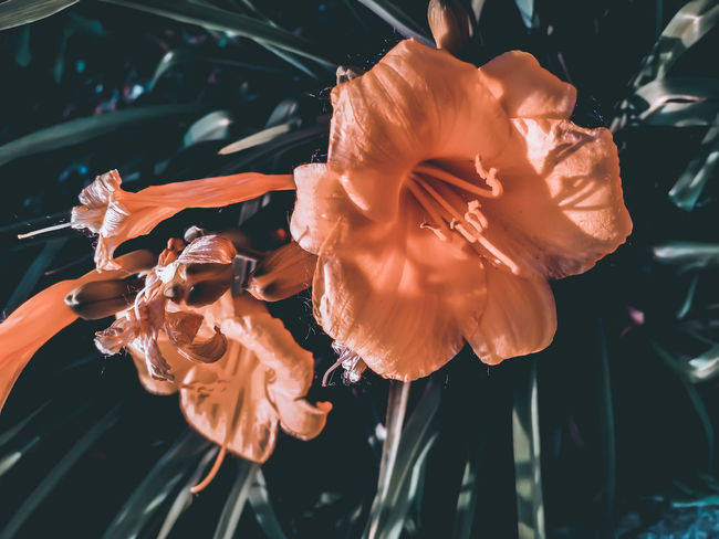 EyeEm Selects UnderSea Sea Life Water Swimming Underwater Scuba Diving Sea Horse Flamingo Flower Head Jellyfish Stamen Fragility Blooming Single Flower Pistil Water Plant Blossom Passion Flower Pollen Apple Blossom Water Lily Rhododendron Plant Life Day Lily Petal Cosmos Flower Hibiscus In Bloom Botany