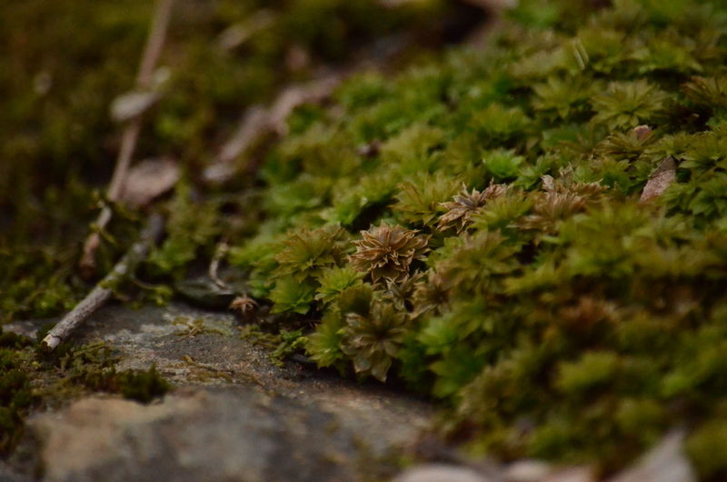 Selective Focus Plant Close-up Beauty In Nature Nature No People Growth Moss Green Color Day Outdoors Plant Part Leaf Vulnerability  Fragility Flower Freshness Land Field Tree