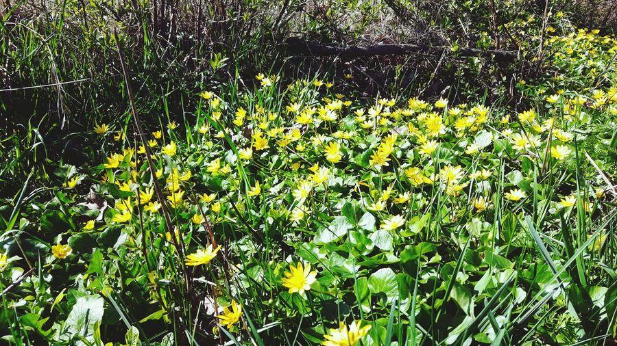 Spring ! Nature Day Grass Flower First Eyeem Photo