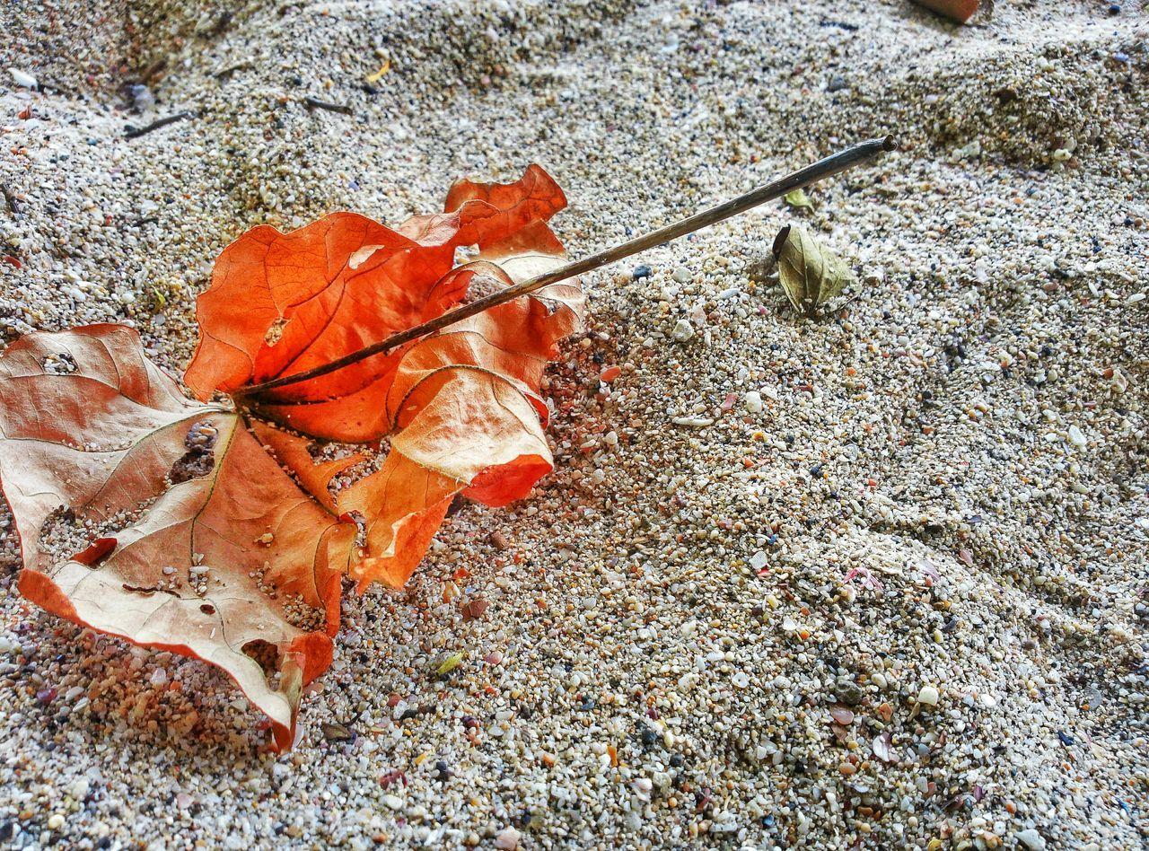 Dry Leaf Fallen On Sand