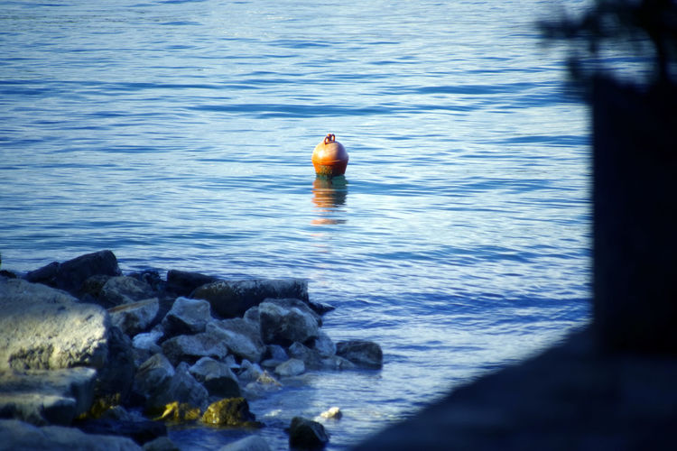 View of duck on rock in sea
