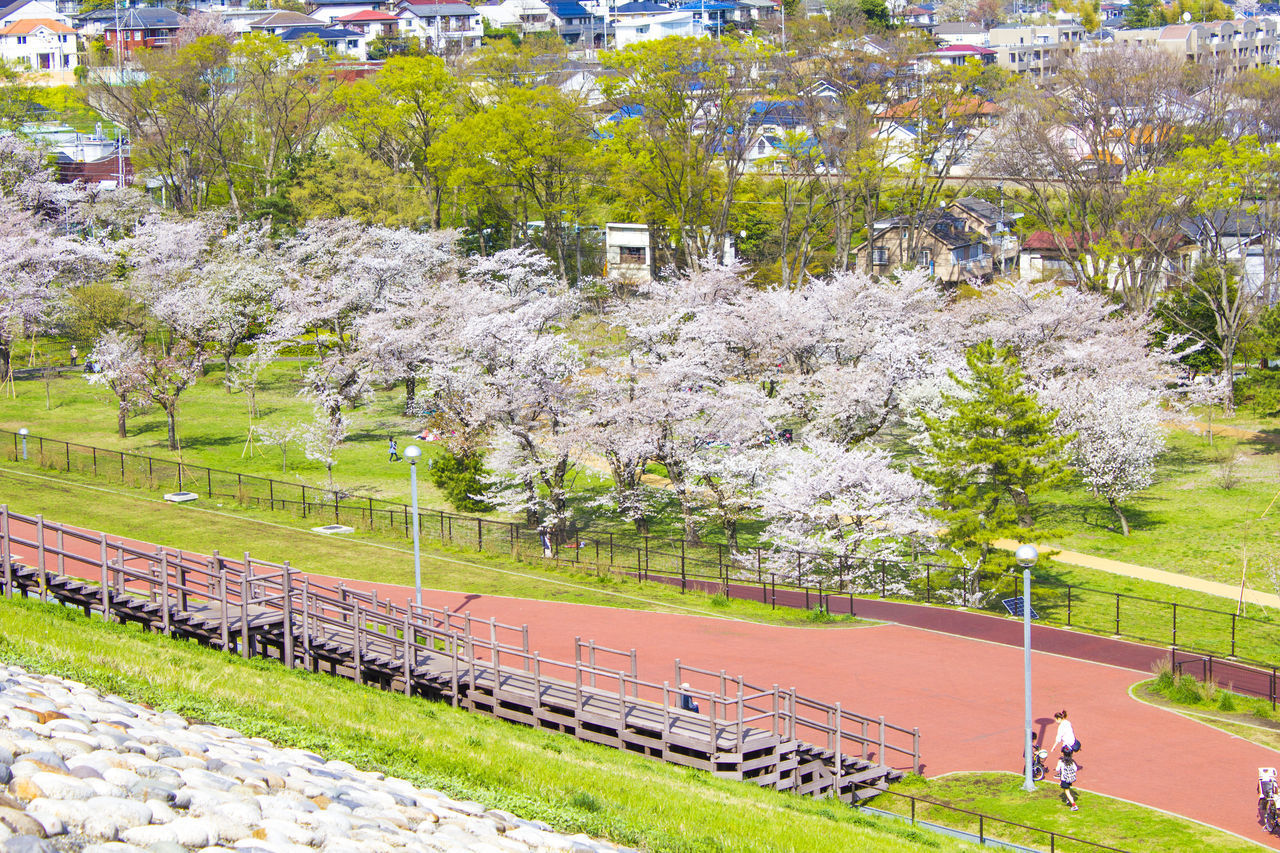plant, tree, day, nature, transportation, architecture, flower, city, growth, real people, incidental people, flowering plant, people, blossom, high angle view, mode of transportation, springtime, adult, grass, outdoors, cherry blossom