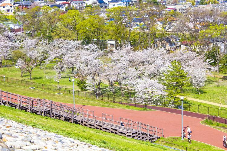 Sayama Park