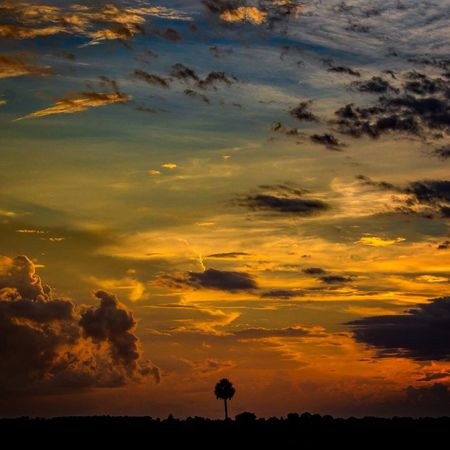 Everglades sunset Sunset Cloud - Sky Beauty In Nature Scenics Silhouette Nature Dramatic Sky Sky Tranquil Scene Orange Color Tranquility Outdoors Idyllic No People Tree Water Day Sommergefühle