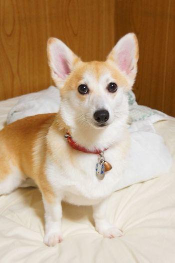My Dog Fukuoka-shi