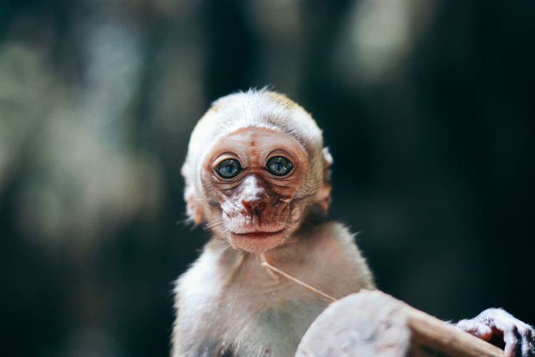 Portrait of infant monkey