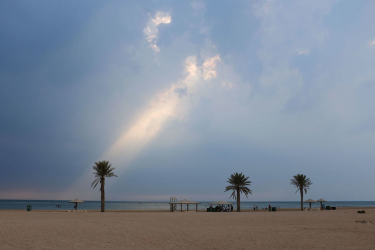 Coconut Palm Tree Beach Beachphotography Nature Clouds And Sky Sky Landscape