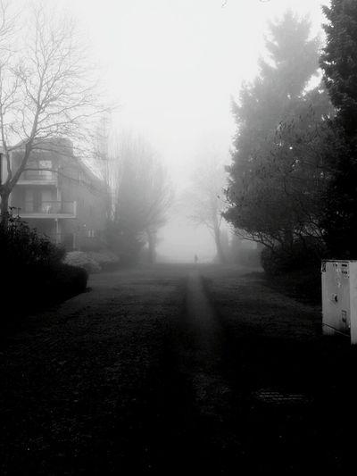 Fog Foggy Morning Creepy