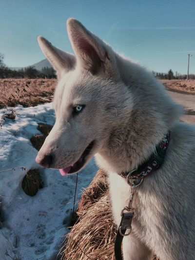 One Animal Animal Themes Domestic Animals Mammal Nature Pets Cold Temperature Day Outdoors No People Dog Landscape Snow Sky Close-up