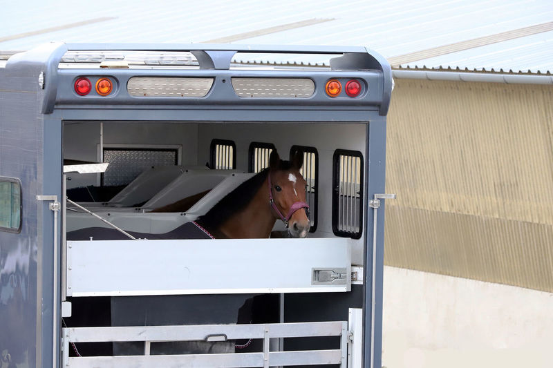 Horse trailer parked near racetrack. Trailer parking for horse transportation Horses Sport Horse Jumping Show Transportation Transport Vehicle Grazing Hay Transportation Vehicle Highway Photography Event Photographer Thoroughbred Race Horse Stallion And Mare Foal Resting Car Transporter Sporting Activities Freetime 👌 Success Stories Mission Trip Metal Box Route Way Of Life Equestrian Sport