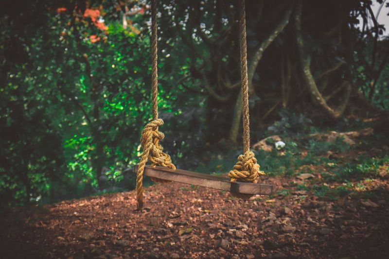View of swing in forest