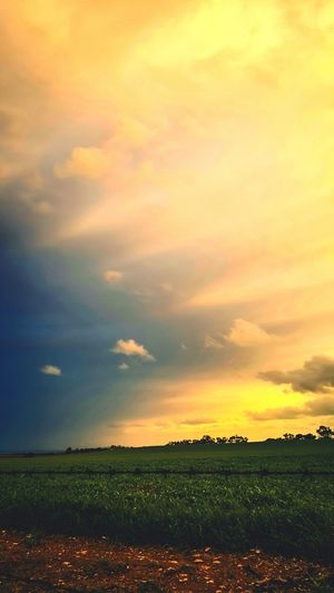 Sunset Agriculture Sky Rural Scene Field Dramatic Sky Yellow Farm Scenics Nature Cloud - Sky No People Beauty In Nature Idyllic Landscape Tranquil Scene Outdoors Day Dramatic Sky Eyeem Market Sunlight Sunbeam Clouds Collection Clouds And Sky Sun