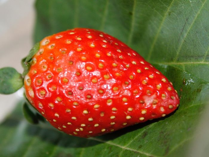 Stroberry Red
