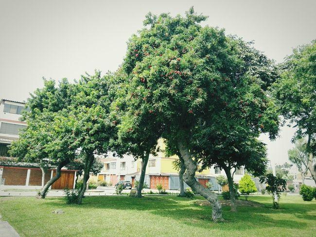 Arboles , Naturaleza Relaxing