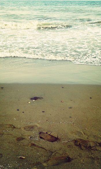 Summer Beach Sea And Sky Live