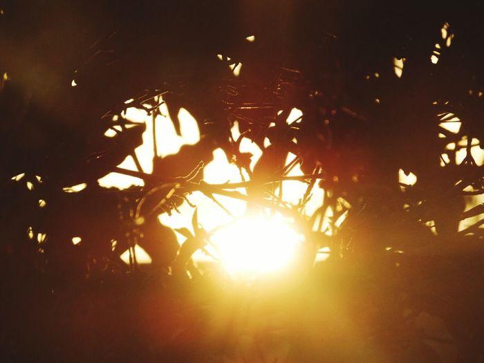 Close-up of bonfire on tree at night