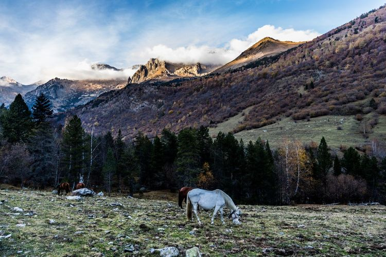 Horse grazing on snow covered mountains against sky