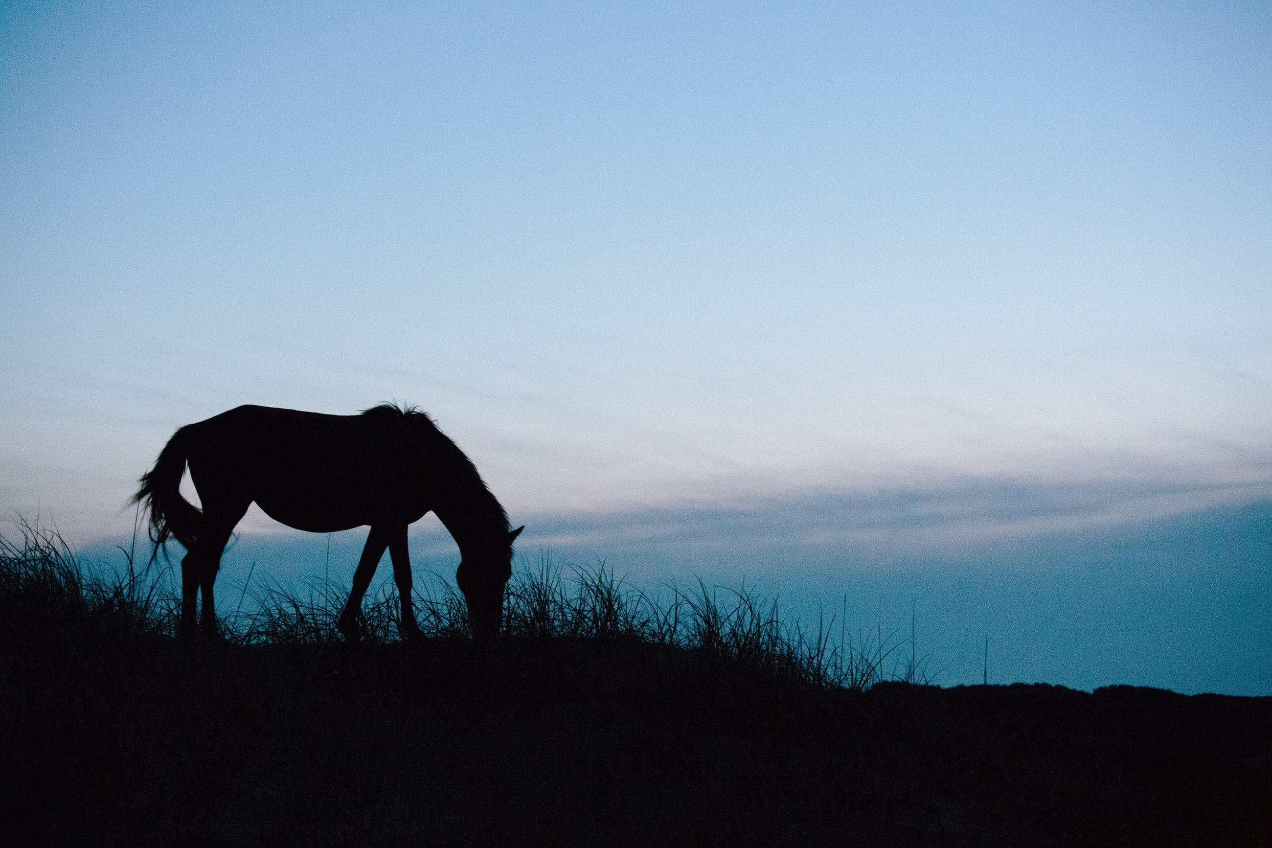 domestic animals, silhouette, mammal, animal themes, horse, full length, standing, field, sky, one animal, working animal, copy space, men, landscape, livestock, rear view, side view, walking, nature