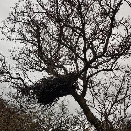 nest Nest