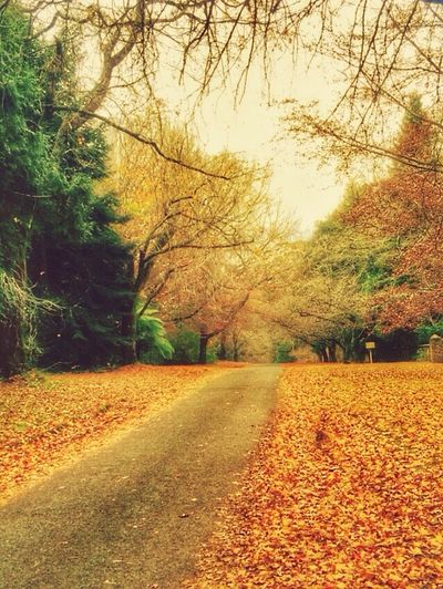IPhoneography Streamzoofamily Tadaa Community Nature I had to stop an take a photo of the Autumn Leaves Taking Photos Landscape_Collection EyeEm Nature Lover The Great Outdoors - 2015 EyeEm Awards