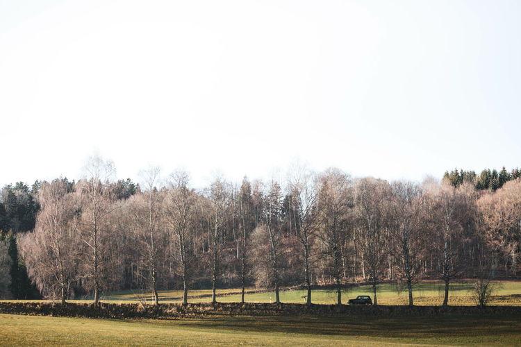 Showcase: February Nature Landscape Car Trees