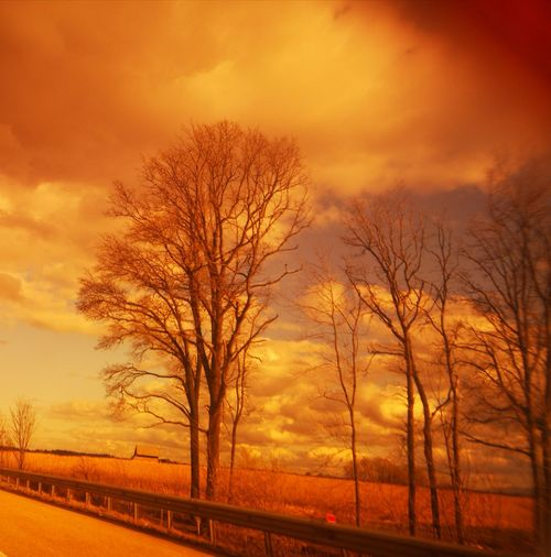 Bare trees on field against orange sky