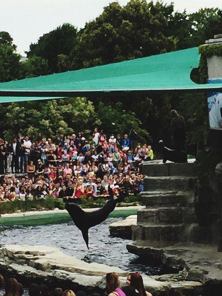 Robbenfütterung Schönbrunn Zoo Schönbrunn