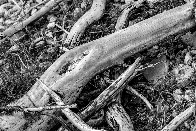 Dead tree roots lying on bed of rocks in black and white, shallow depth of field, Dospat, Bulgaria Black & White Bulgarian Nature Dead Tree Death Diagonal Lines Nature Nature Photography Objects Travel Backgrounds Beauty In Nature Black And White Blackandwhite Bulgaria Dead Dead Plant Diagonal Lines Diagonals Dospat Nature_collection Nature_perfection Naturelovers Root Roots Of Tree