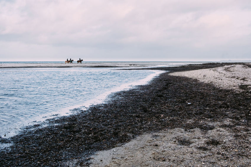 Horses Beach Beauty In Nature Cloud - Sky Day Horizon Over Water Nature Outdoors People Sand Scenics Sea Sky Tranquil Scene Tranquility Water Wave