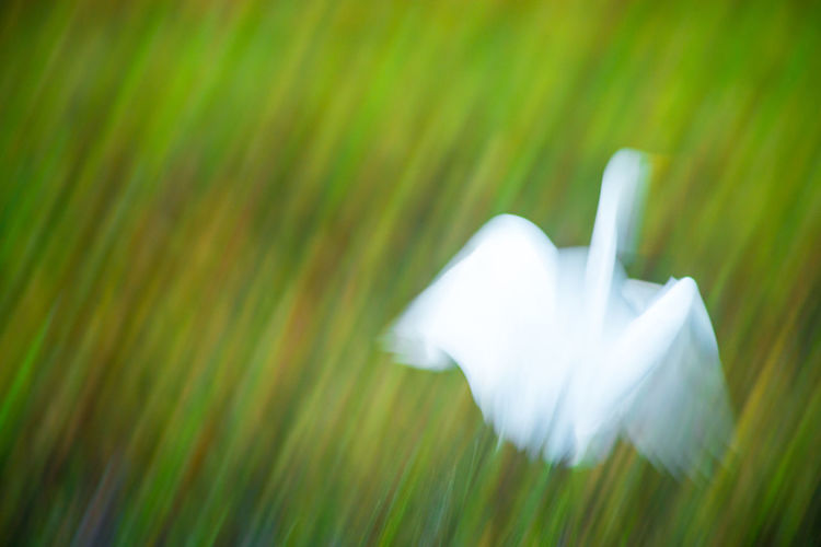 Bird Close-up Day Fragility Grass Green Color Motion Nature No People Outdoors White Color