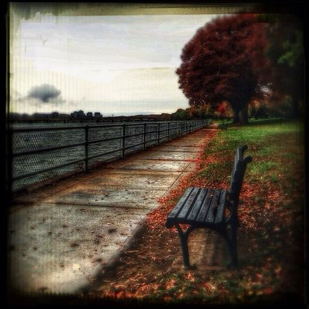 Waiting for fall • The bench, anchored to the shore, dreams of sailing Bench Autumn Autumn Leaves Tadaa Community