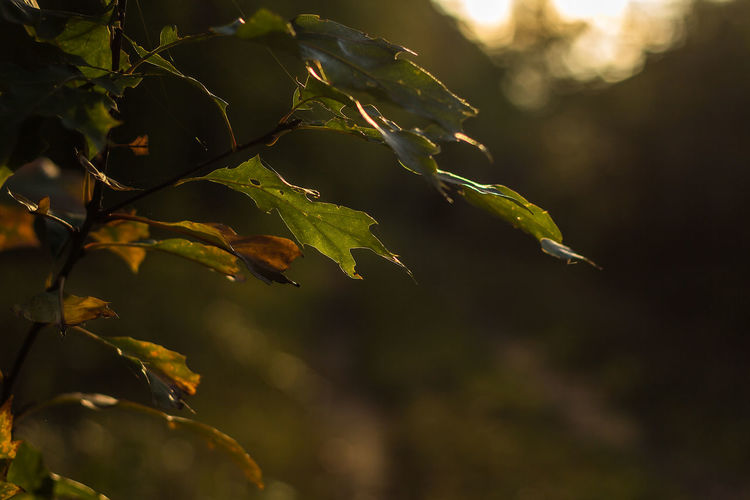 Beauty In Nature Branch Close-up Day Focus On Foreground Freshness Growth Leaf Nature No People Outdoors Plant Tree