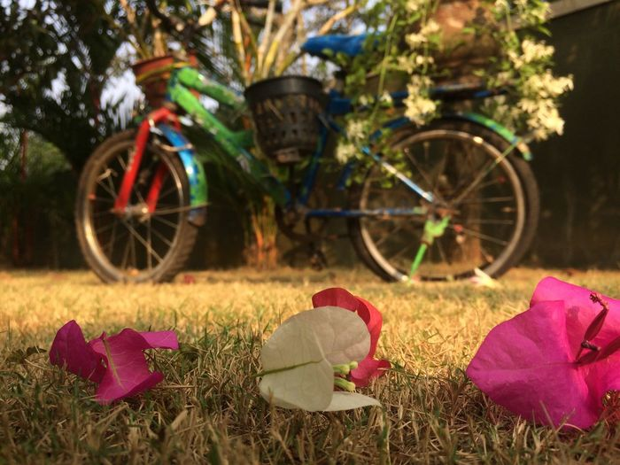 Nature Beauty In Nature Childhood Memories Bicycle Purple n White Outdoors Grass