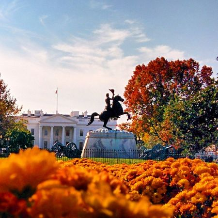 Colorful autumn by The White House with Jackson statue TheWhiteHouse Whitehouse Washington WashingtonDC DC USA United_States US president Obama colorful orange tree nature nature_photo flower magnificent view panorama beautiful cloud wheather nature nature_photo view panorama beautiful cloud wheather nature nature_photo view panorama beautiful cloud sunny wheather