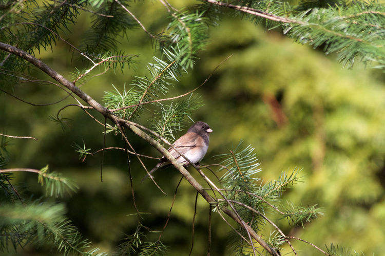 Animal Wildlife Animal Themes Animals In The Wild Animal One Animal Green Color Tree Bird Perching Outdoors No People Branch Beauty In Nature Day Close-up