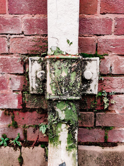 a leak on a drainage pipe Leaking Leak Fern Taken Over By Nature  Leaky Pipes Drainage Moss Moss & Lichen Overtaken Growth Wet Growing Backgrounds Full Frame Paint Red Textured  Brick Wall Wall - Building Feature Close-up Architecture Peeled Worn Out Creeper Ivy Peeling Off Wall Decline Weathered Creeper Plant