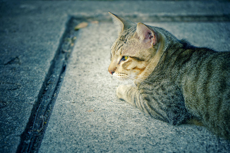 Close-up of a cat looking away on road