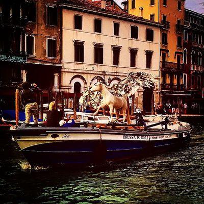Wingedhorse Horse Venice Wingedhorseonthegrandcanal Grandcanal Cavalloalato Venezia Cavallo Cavalloalatosulcanalgrande Canalgrande Biennaledivenezia Venicebiennale2015 Soloavenezia