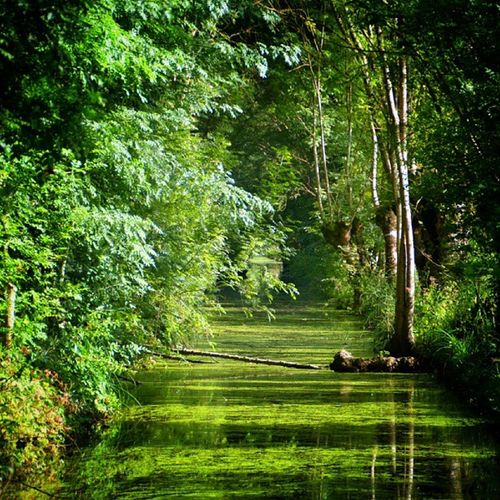 50 #shades of green / 50 nuances de vert #instameetmarais2013 #igersniort #niort #maraispoitevin #deuxsevres #igersfrance Worldingram Ilovethisplace Shades Ig_photoflair Niort Ig_europe Igersfrance Splendid_shotz Igworldclub Landscape_captures Landscapehunter Thebestphotographers Rsa_nature World_specialist Momentsinthesun Globe_travel Tree_captures Igersniort Ic_wow Citybestpics Allshots_ Cs_reality Stunning_shots Mafia_moments Igs_photos Decisive_instant Deuxsevres Instameetmarais2013 Urm_feature Maraispoitevin