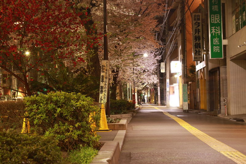 Architecture Building Exterior Built Structure Cherry Blossoms City EyeEm EyeEm Best Shots EyeEm Gallery Illuminated Japan Japan Photography Nakamurabashi Nature Nerima Night Night Lights Nightphotography No People Outdoors Road Spring Tree