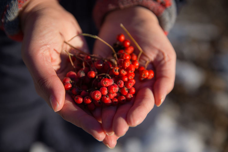 Cropped Image Of Hands Holding Red Currants
