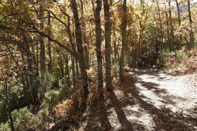 Otoño Tree Naturaleza Senderismo Arboles Tejera Negra Tranquility Luces Y Sombras