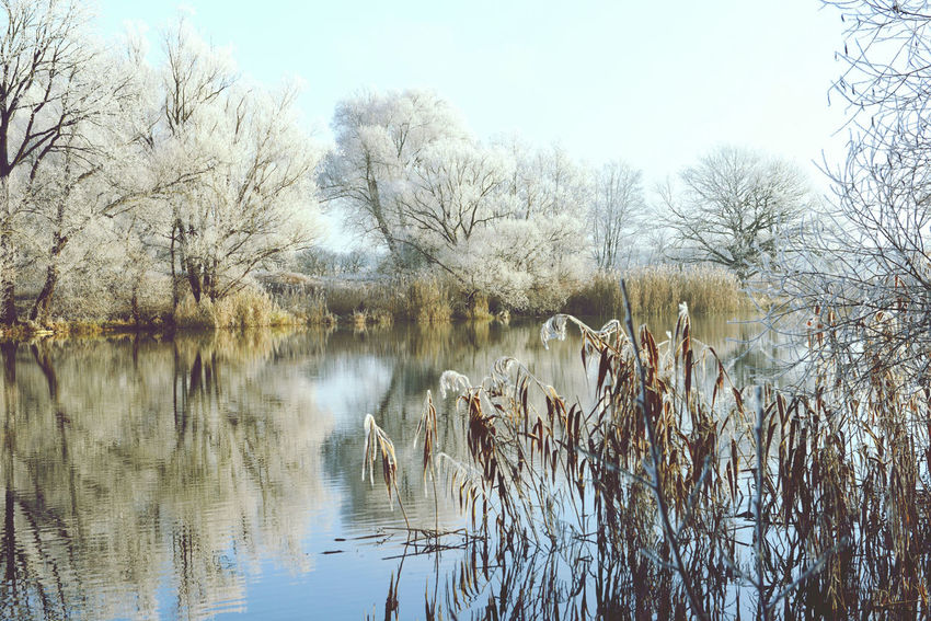 Havel River landscape on rime frost morning (Havelland, Germany) Brandenburg Frosty Frosty Mornings Havel Havel River Havelland Havelland Germany Havelradeweg Hoar Frost Hoarfrost Landscape Landscape_Collection Landscapes With WhiteWall Nature Outdoors Reed - Grass Family Reflection Rime Rime Ice Rime On Tree Tranquility Tree Water Winter