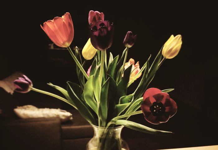 Fresh Light And Shadow Sheer Bouquet Tulips Flower Nature Growth Fragility Plant Freshness Beauty In Nature