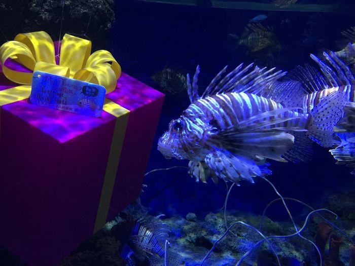 Lion fish at