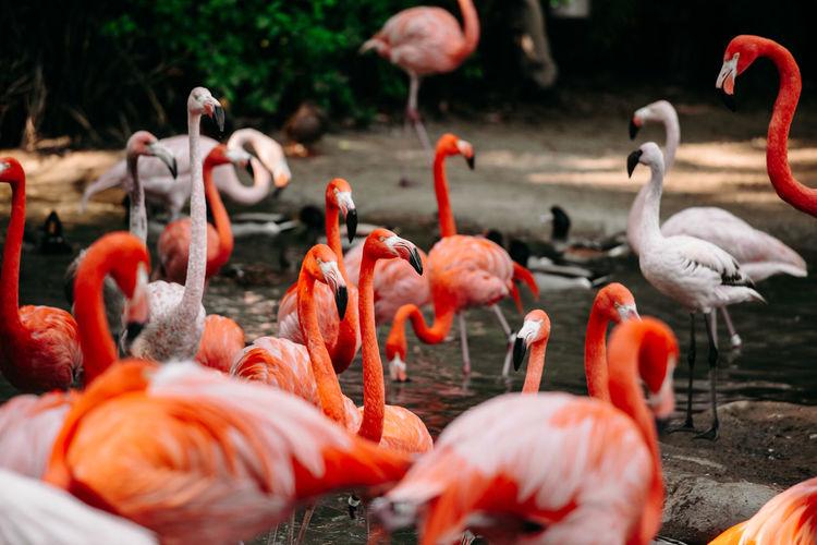 Flamingoes at the lake