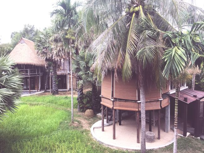 Plant Built Structure Architecture Tree Building Exterior Growth Grass House Palm Tree Building Nature Tropical Climate Roof Green Color Land Day Field No People Thatched Roof Residential District