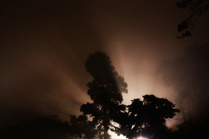 Beauty In Nature Cloud Cloud - Sky Fine Art Photography Concert Lights Dark Forest Growth Idyllic Light Beams Lights Low Angle View Majestic Nature Outdoors Outline Overcast Scenics Silhouette Sky Sunset Tranquil Scene Tranquility Tree Treetop